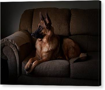 Looking Out The Window - German Shepherd Dog Canvas Print