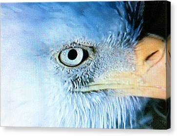 I See You Canvas Print by Beverly Johnson