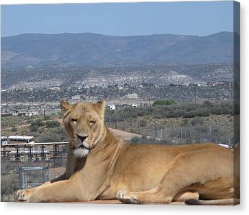 Canvas Print featuring the photograph Looking The World Over by Jeanette Oberholtzer