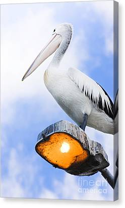 Looking To The Future Canvas Print by Jorgo Photography - Wall Art Gallery