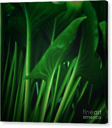 Looking Under A Hosta Plant Canvas Print by Sherry Hallemeier