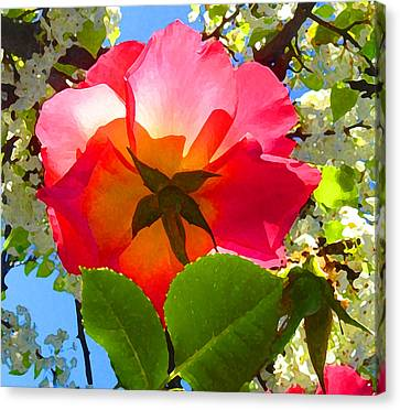 Looking Up At Rose And Tree Canvas Print by Amy Vangsgard