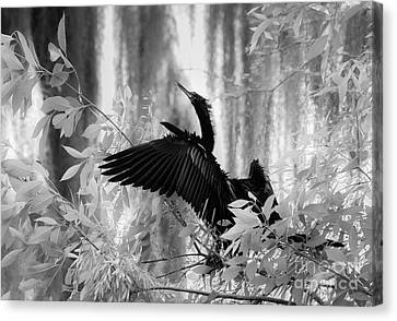 Looking Up, Black And White Canvas Print by Liesl Walsh