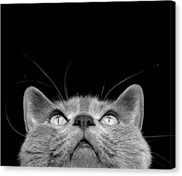 Looking Up Canvas Print by Laura Melis