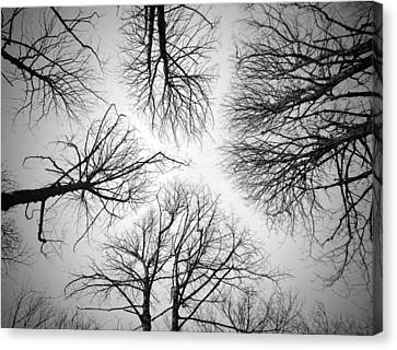 Looking Up Canvas Print by Philip Openshaw