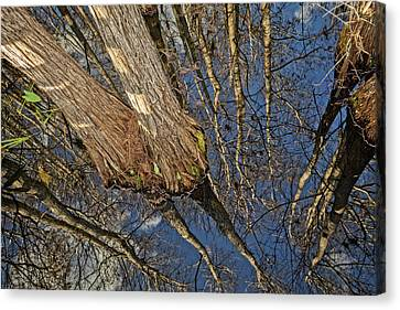 Canvas Print featuring the photograph Looking Up While Looking Down by Debra and Dave Vanderlaan