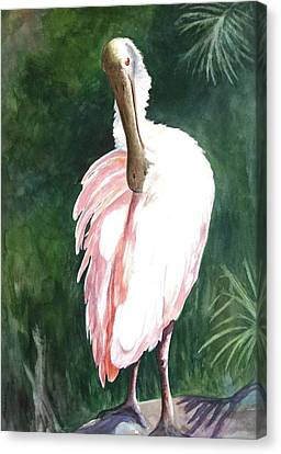 Canvas Print featuring the painting Look'n Back - Spoonbill by Roxanne Tobaison
