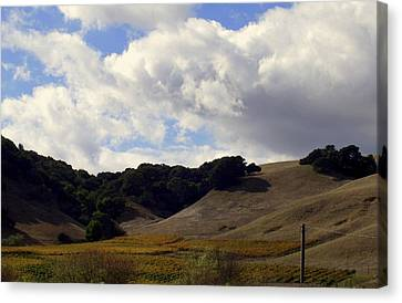 Looming Field Of Sonoma Canvas Print by Deborah  Crew-Johnson
