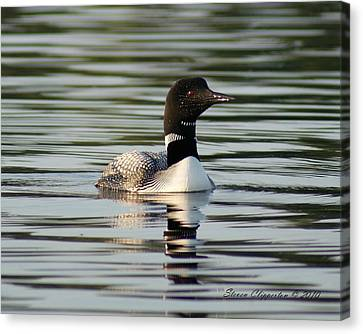 Loon 1 Canvas Print by Steven Clipperton