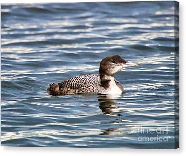 Loon  9509 Canvas Print by Jack Schultz