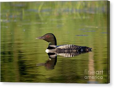 Loon Reflection Canvas Print by Cheryl Baxter