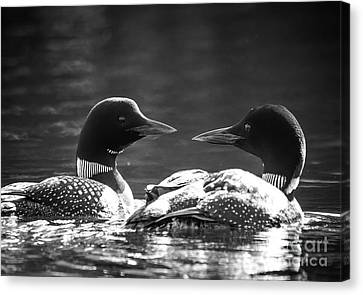 Loons In Black And White Canvas Print by Cheryl Baxter