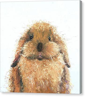 Lop Eared Rabbit - Hamish Canvas Print by Jan Matson