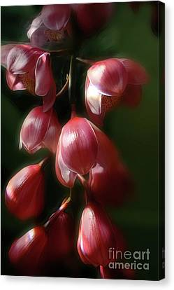 L'orchide Cymbidium Canvas Print