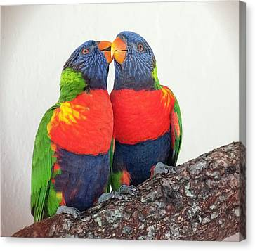 Lorikeet Lovebirds Canvas Print
