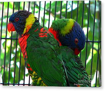 Canvas Print featuring the photograph Lory by Greg Patzer
