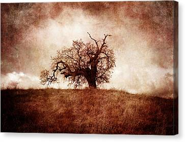 Lost And Wandering Canvas Print