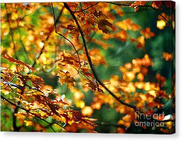 Lost In Leaves Canvas Print by Kathy McClure