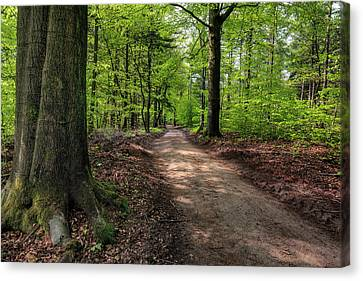 Lost In Speulderbos Canvas Print by Tim Abeln