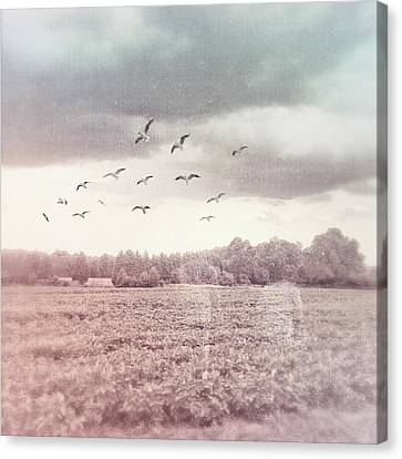 Lost In The Fields Of Time Canvas Print