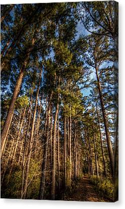 Lost In The Woods Canvas Print by Linda Unger