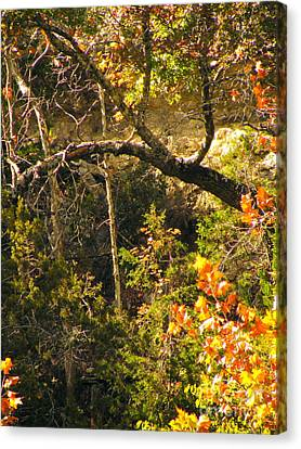 Lost Maples Scenery Canvas Print by Joe Jake Pratt