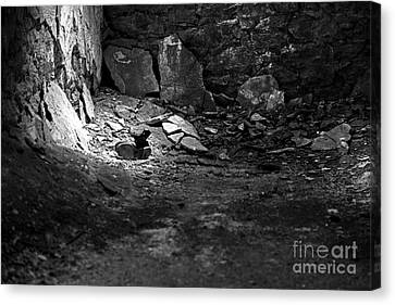 Lost Shoe - Black And White  Canvas Print