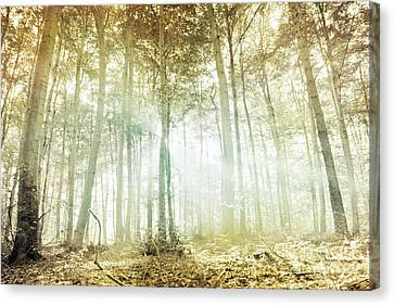 Lothlorien Canvas Print by Violet Gray