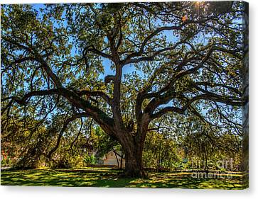 Lots Of Limbs Canvas Print by Larry Braun