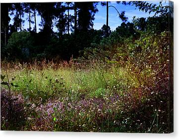 Lots Of Weeds Canvas Print by Joseph G Holland