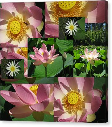 Lotus And Lily Art Canvas Print by Cathy Jacobs