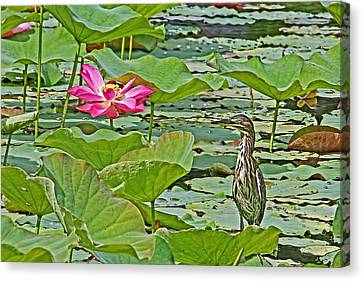 Lotus Blossom And Heron Canvas Print