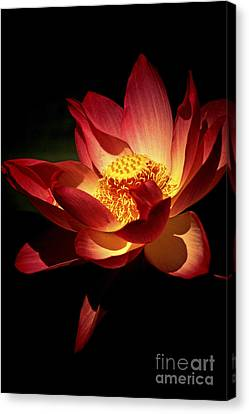 Paul Faust Canvas Print - Lotus Blossom by Paul W Faust -  Impressions of Light