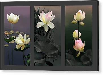 Lotus Collection II Canvas Print by Jessica Jenney