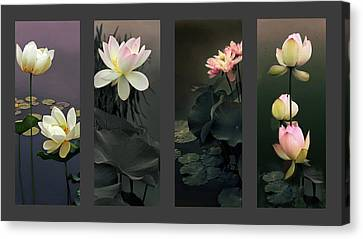Lotus Collection Canvas Print by Jessica Jenney