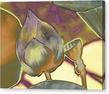 Lotus Dreaming 5 Canvas Print