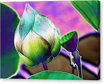 Lotus Dreaming 8 Canvas Print
