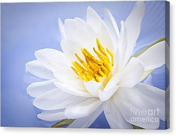 Lotus Flower Canvas Print by Elena Elisseeva