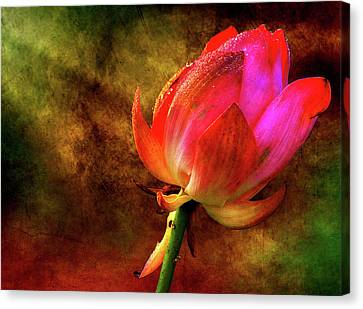 Lotus In Texture - A Present For A Friend Canvas Print by Rohit Chawla