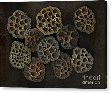 Lotus Pods Canvas Print by Christian Slanec