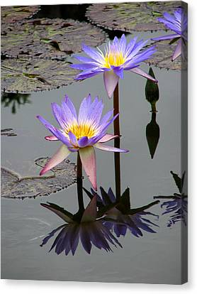 Lotus Reflection 4 Canvas Print