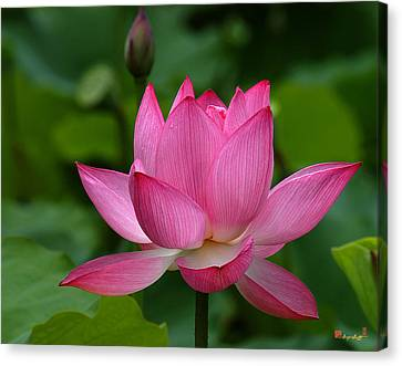 Lotus--shades Of Past And Future Dl029 Canvas Print by Gerry Gantt
