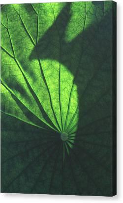 Lotus Leaves Canvas Print - Lotus Shadow Of Phoenix by Lian Wang