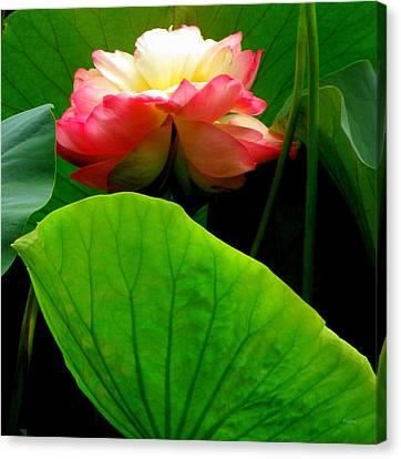 Lotus Sheild Canvas Print