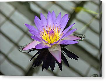 Canvas Print - Lotus by Vari Buendia