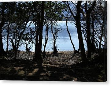 Lough Leane Through The Woods Canvas Print by Aidan Moran