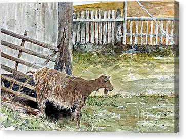 Louisbourg Resident Canvas Print by Monte Toon