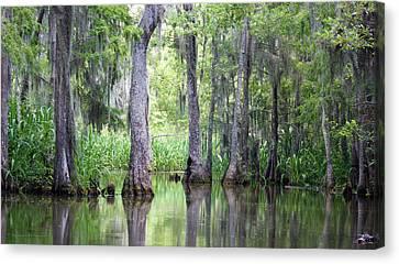 Louisiana Swamp 5 Canvas Print