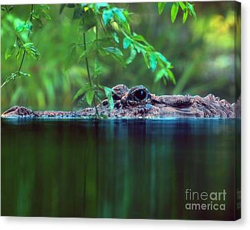 Louisiana Swimming Instructor  Canvas Print