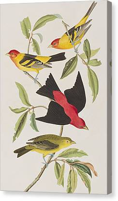 Louisiana Tanager Or Scarlet Tanager  Canvas Print by John James Audubon